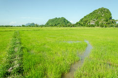 Rice field and little mountain Stock Photos
