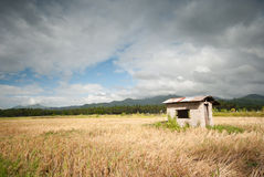 Rice field at Lobo, Batagans, Philippines Stock Photos