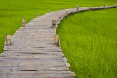 Rice field and Long bamboo bridge Royalty Free Stock Image