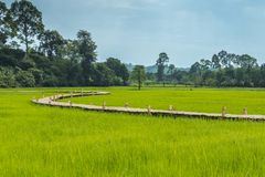 Rice field and Long bamboo bridge Stock Images