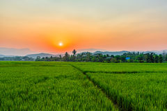 Rice field Mae Kon at sunset in Chiang Rai,Thailand Stock Image