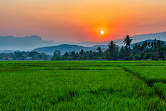 Rice field Mae Kon at sunset in Chiang Rai,Thailand Royalty Free Stock Images