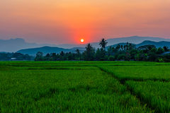 Rice field Mae Kon at sunset in Chiang Rai,Thailand Stock Photo