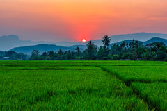 Rice field Mae Kon at sunset in Chiang Rai,Thailand. Beautiful is Rice field of Mae Kon at sunset in Chiang Rai,Thailand Stock Image