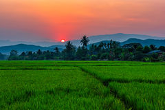 Rice field Mae Kon at sunset in Chiang Rai,Thailand Royalty Free Stock Image