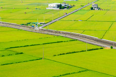 Rice field in Miaoli, Taiwan Royalty Free Stock Images