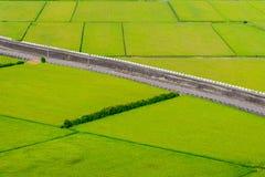 Rice field in Miaoli, Taiwan Royalty Free Stock Image