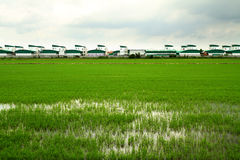 Rice field and modern factory Royalty Free Stock Photos