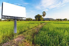 Rice Field in the Morning. Blank billboard for advetising at rice field morning Stock Images