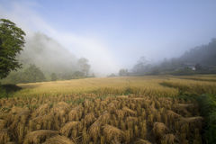 Rice field on mountain Stock Photos