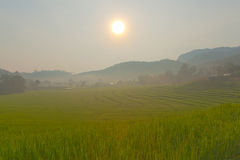 Rice field on mountain. stock photos