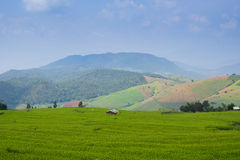 Rice field mountain Stock Photo