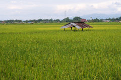 Rice field and mountain along road in rural of Thailand Stock Photo