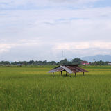 Rice field and mountain along road in rural of Thailand Royalty Free Stock Images