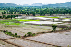 Rice field with mountain arid dry. At wat tham sua,kanchanaburi Royalty Free Stock Photography