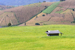 Rice field with mountain background at Ban Pa Bong Piang, Chiang Mai in Thailand, focus on cottage Stock Photography