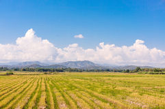 Rice field among mountain and blue sky Royalty Free Stock Photography
