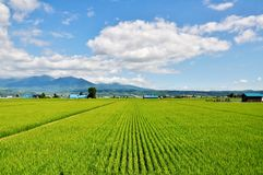 Rice field, mountain and blue sky royalty free stock photography