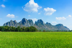 Rice field among mountain on central of Thailand Royalty Free Stock Photo