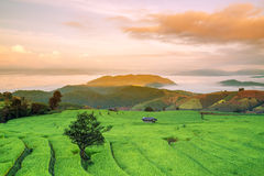 Rice field on the mountain. Royalty Free Stock Photography