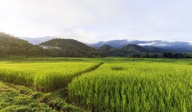 Rice field and mountain Stock Photo