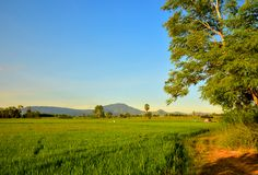 The Rice field and mountain with the sky royalty free stock photography