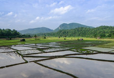 Rice field with mountain Stock Photography