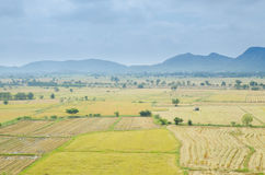 Rice field with mountain Stock Photo