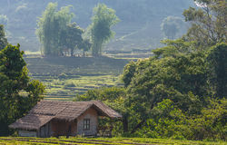Rice field in mountains Royalty Free Stock Images