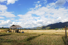 Rice field with mountains. A harvested rice field with mountains in the background Royalty Free Stock Photos