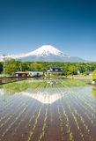 Rice Field With Mt Fuji Stock Photo