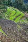 Rice field in Nepal Stock Photos