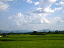 Rice field in the north of Thailand Royalty Free Stock Images
