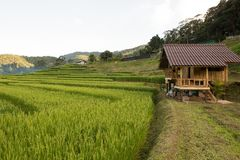 Rice field on the north of Thailand Stock Photos