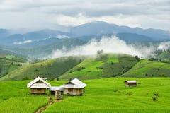 Rice field at Pa Bong Piang village Stock Photos