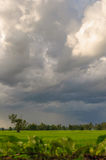 Rice Field. Paddy field and cloudy sky Stock Photos