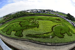Rice field painting. Royalty Free Stock Photography