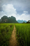 Rice Field Path. A path in a rice field, Vang Vieng, Lao Royalty Free Stock Photo