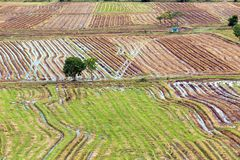 Rice field pattern Royalty Free Stock Images