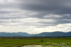 Rice field and rain cloud Royalty Free Stock Photography