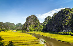 Rice field and river in TamCoc, NinhBinh, Vietnam Stock Photo