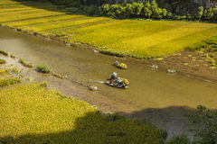 Rice field and river in TamCoc, NinhBinh, Vietnam Royalty Free Stock Photography