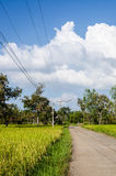 Rice field and road Royalty Free Stock Photos