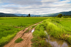 Rice field and road Stock Photos
