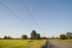 Rice field and road. Royalty Free Stock Photography