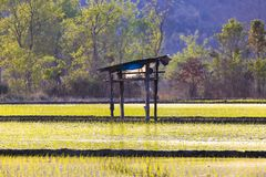 Rice field and  central in field a small hut. stock photo