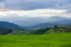 Rice field, Rural mountain view with beautiful landscape Royalty Free Stock Images