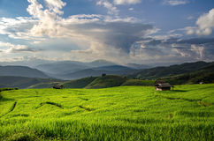 Rice field, Rural mountain view with beautiful landscape. Green grass and blue sky Stock Photo