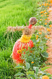 Rice field with scarecrow Stock Photos