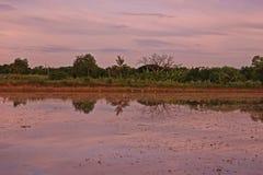 Rice field scenery Stock Photo